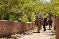 Solor / Beter Horseback Riding