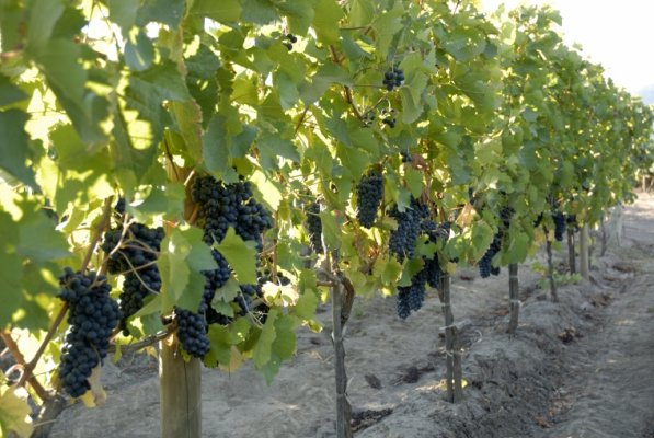 The Magical Wine Route in Colchagua Valley