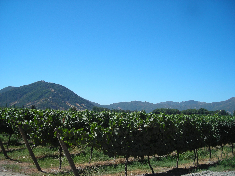 Ruta del Vino de Colchagua
