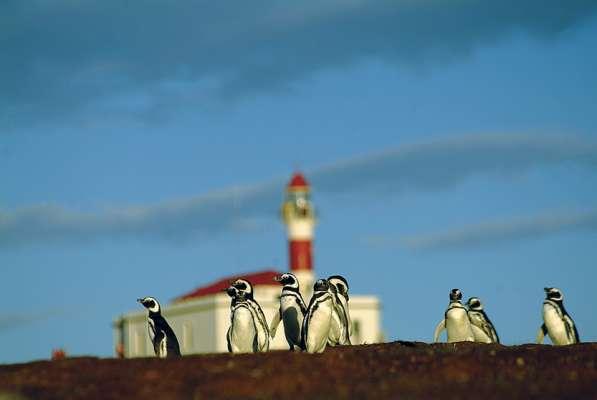 Tierra del Fuego, Pingüino Rey y Crucero