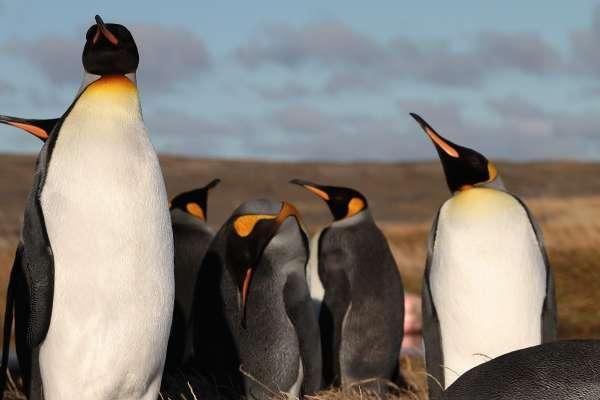 Tierra del Fuego, Pinguin Rei e Cruzeiro