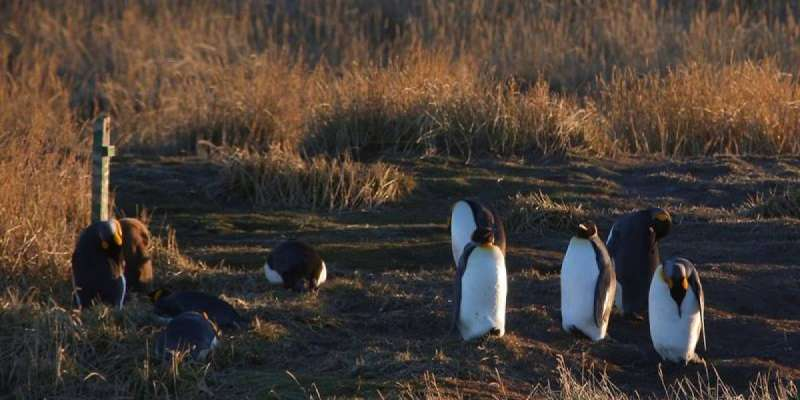 King Penguin Park - Full Day Tierra del Fuego