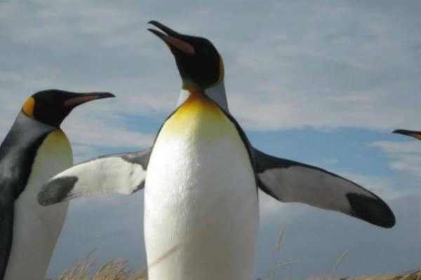 Parque Pingüino Rey - Full Day Tierra del Fuego