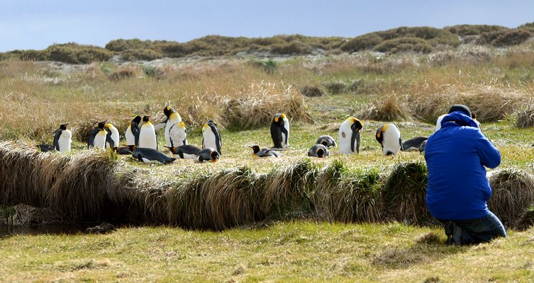 King Penguin Park - Full Day Tierra del Fuego