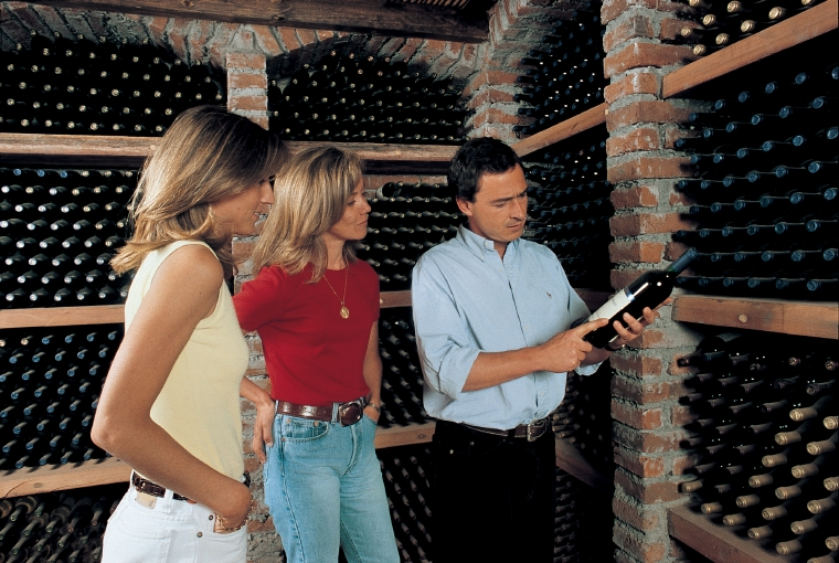 Concha y Toro Vineyard Wine Tour