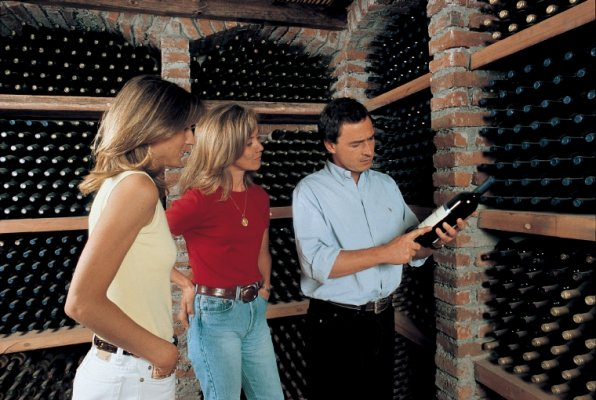 Concha y Toro Vineyard Wine Tour