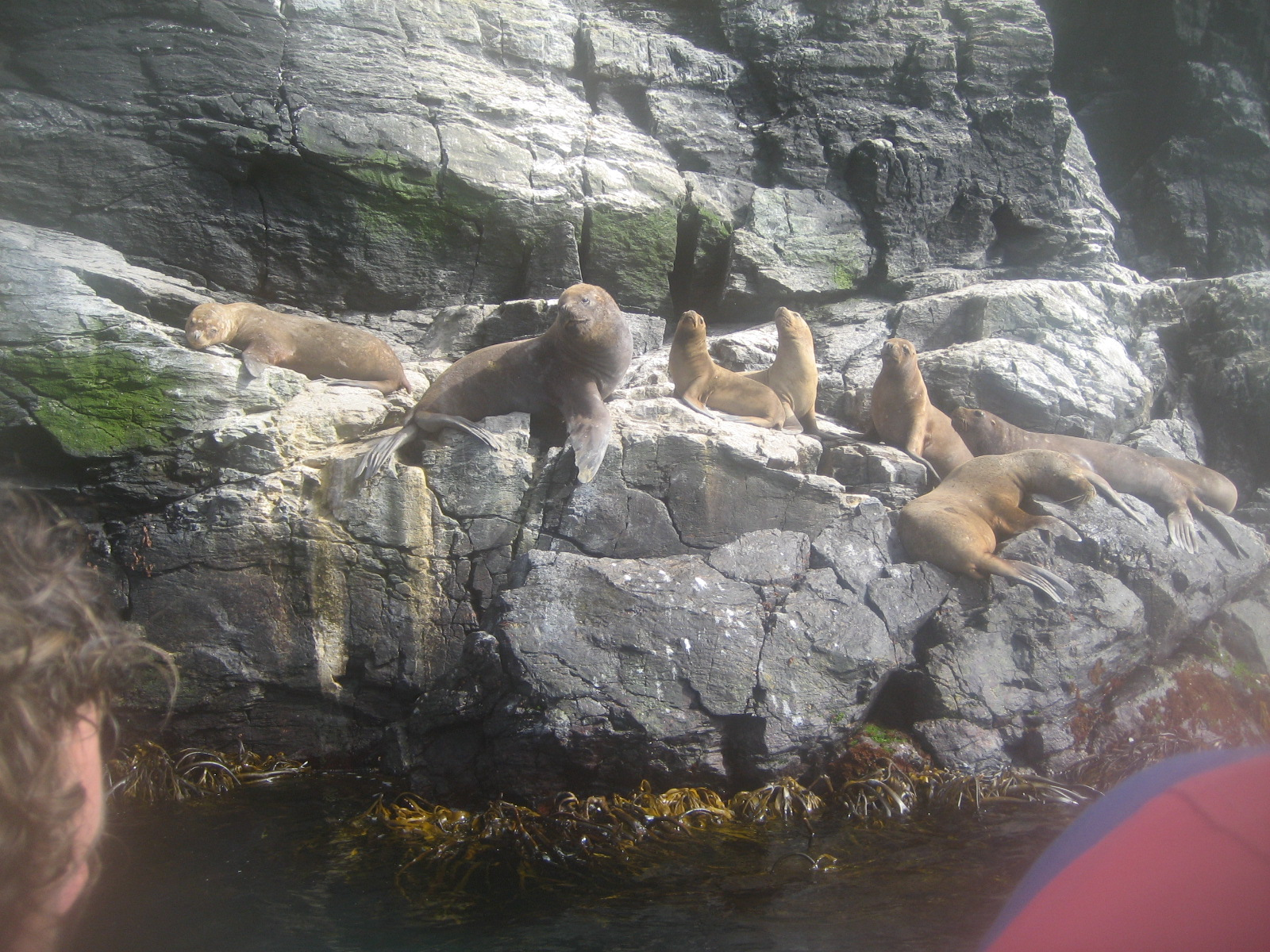 Isla Damas: Reserva Nacional del Pinguino Humboldt