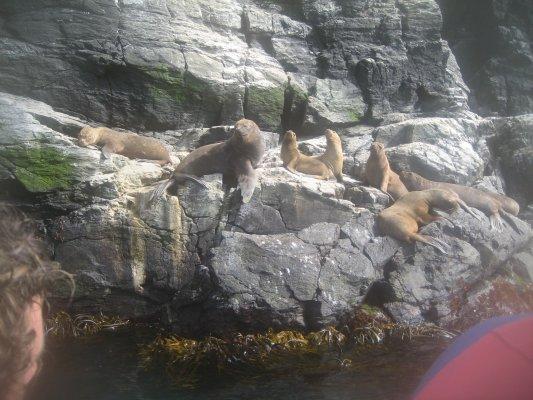 Ilha Damas: Reserva Nacional do Pinguin Humboldt
