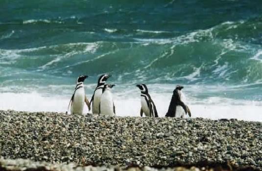 Seno Otway Penguin Burrows