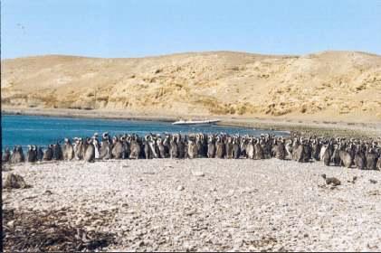 Navegación Isla Magdalena