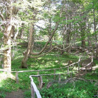 Trekking en Reserva Magallanes