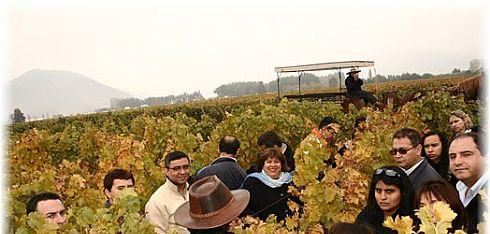 Colchagua Valley and Santa Cruz Vineyard