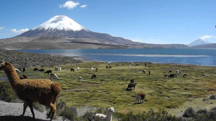 Lauca and Putre National Park