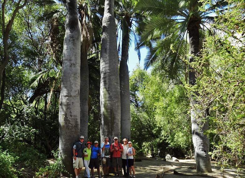 La Campana National Park - Ancient Forest Hike
