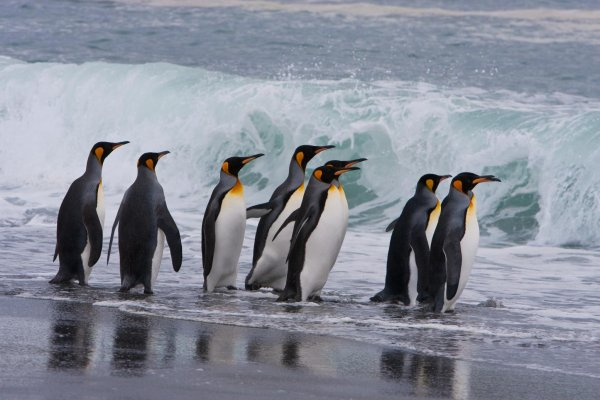 Weddell Sea - Emperor Penguin Voyage