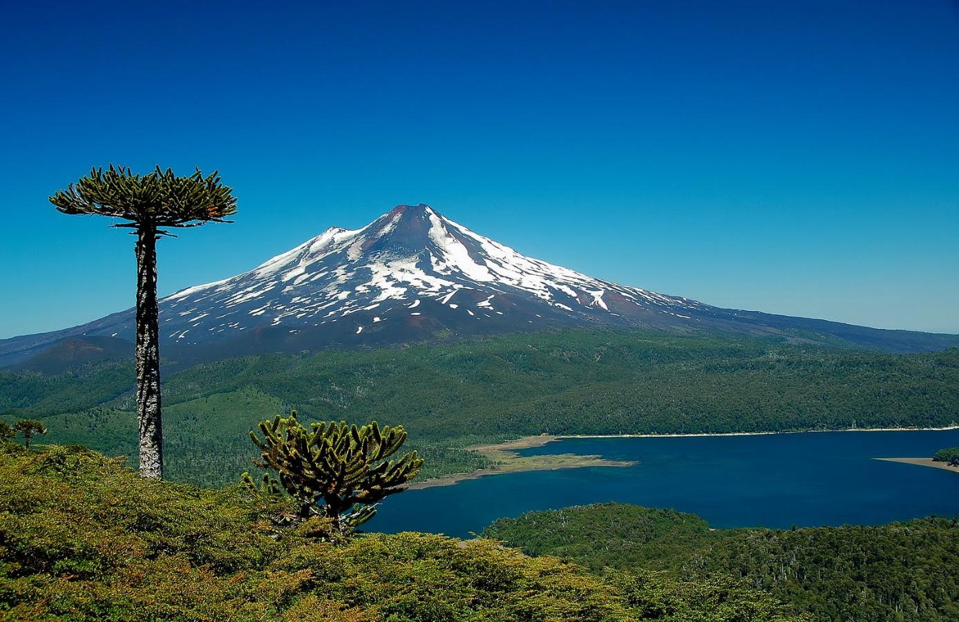 Resultado de imagen para Parque Nacional Conguillio