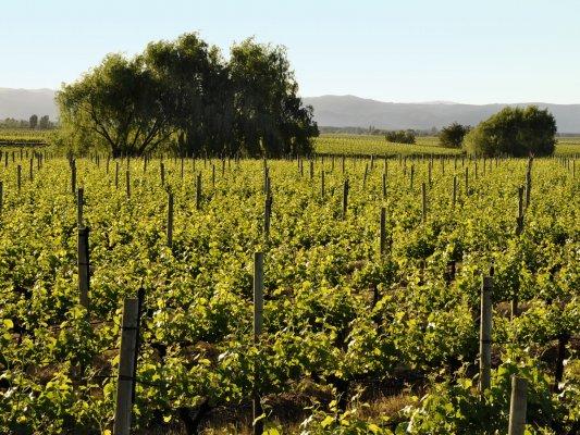 Ruta del Vino Valle de Curicó
