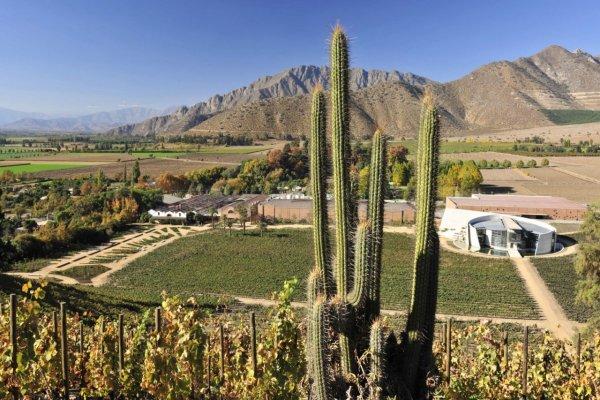 Rota do Vinho Valle del Aconcagua, Vinha Mendoza