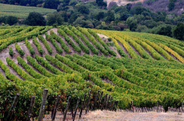 Rota do Vinho Valle del Maule