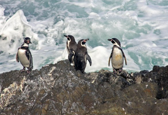 Penguin Natural Monument